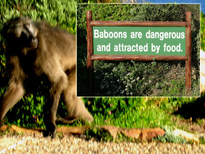 baboon_sign.jpg